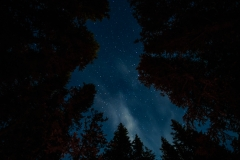 Looking up from Tombstone Campground
