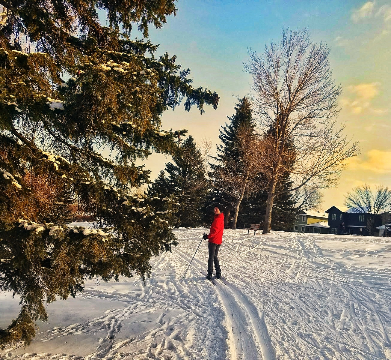 Cross-Country Skiing in the city at Canmore Park