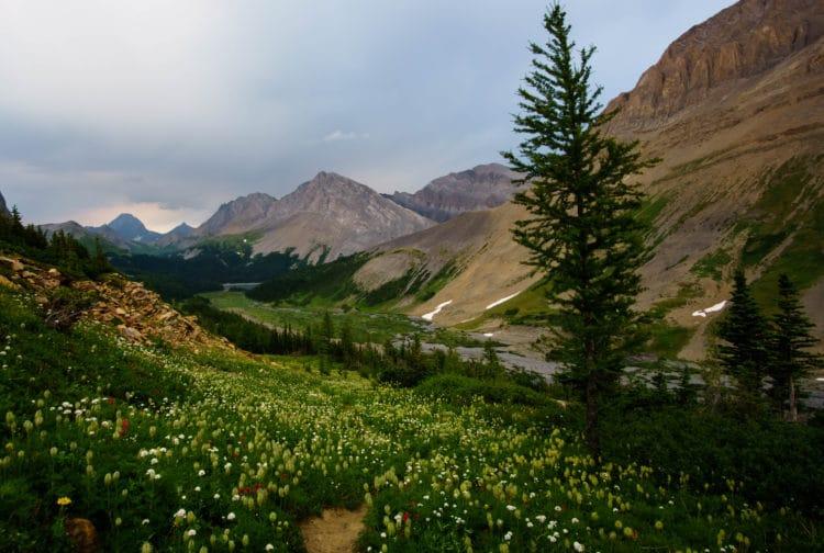 Descending through wildflowers on the way to Three Isle Lake