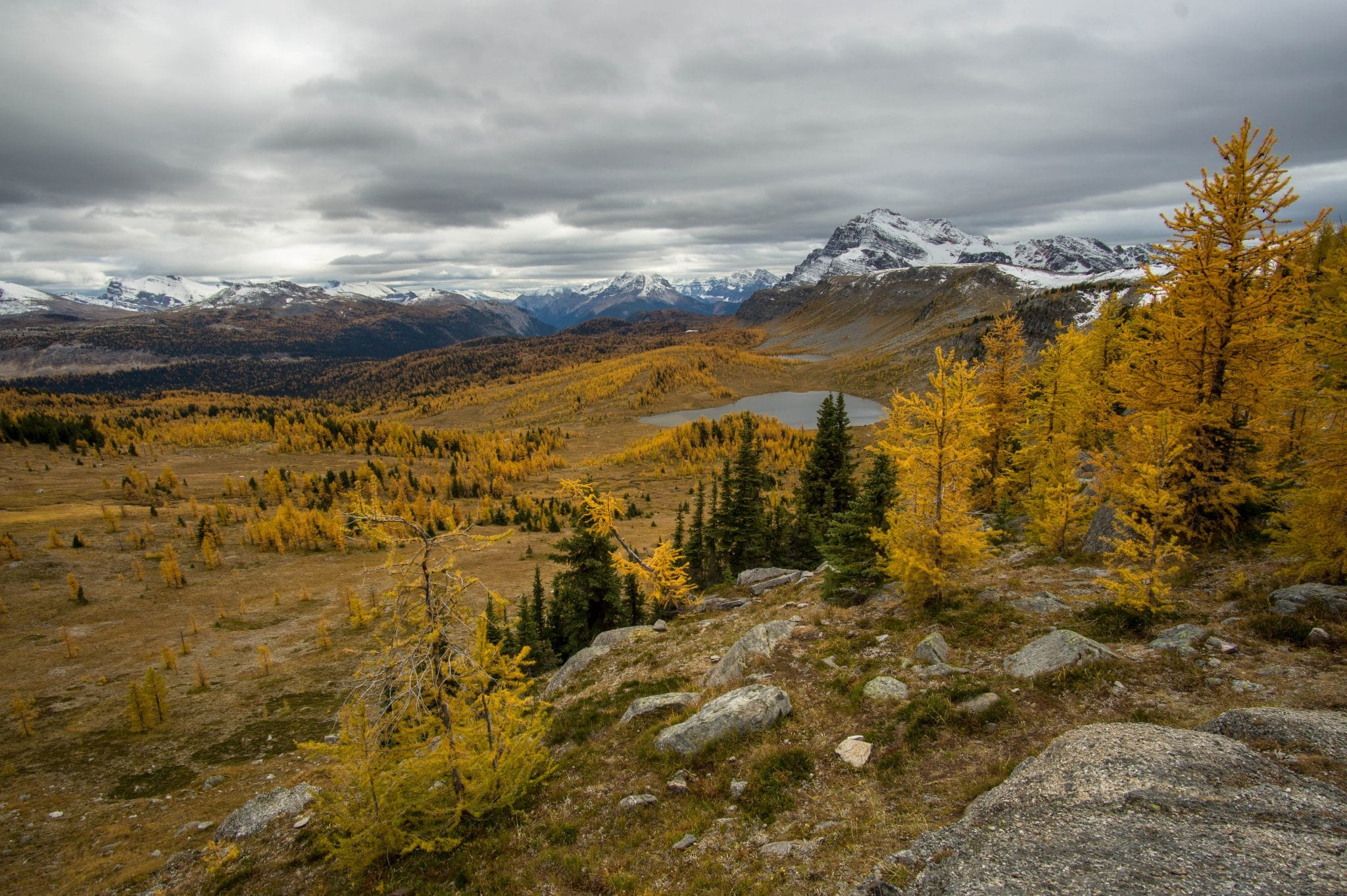 Best Hikes To See Golden Larches In The Fall Zen Travellers