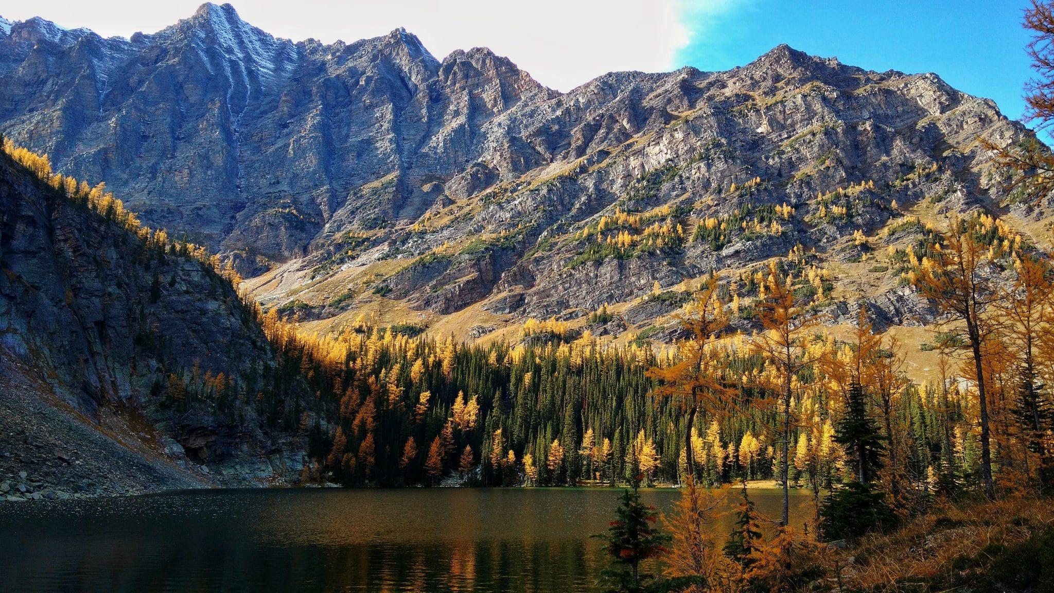 Larches at Taylor Lake