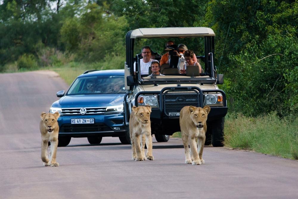 Kruger National Park Rental Car and Lions